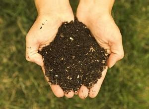 compost1-300x221